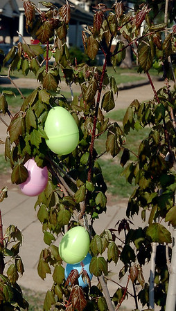 Brightly colored Easter eggs adorn a tree at 307 W. Cherokee Friday, April 18, 2014. (Staff Photo by BONNIE VCULEK)