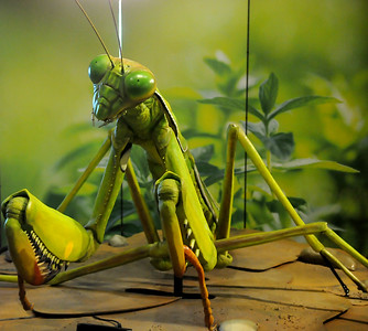 Leonardo's Backyard Bugs
