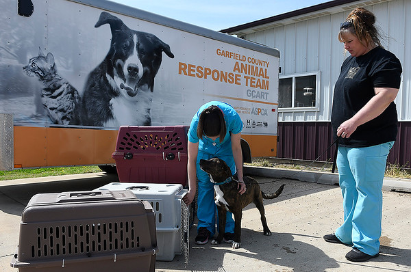 Mandy Lance and Linda Taylor load a dog for transport at the Enid SPCA. Animals are transported to different rescue organizations around the country for adoption. (Billy Hefton / Enid News & Eagle)