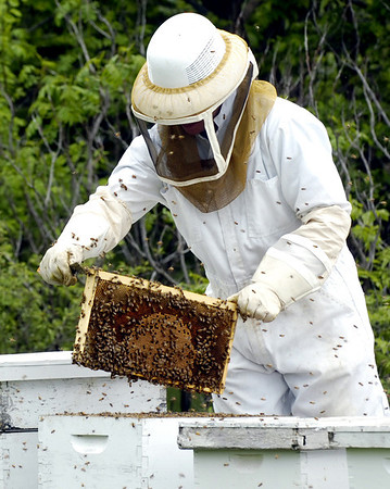 Phil Voth removes a frame from one of his 34 bee hives he tends northwest of town. (Staff Photo by BILLY HEFTON)