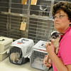 Vickie Grantz (right), executive director of the Enid SPCA, holds Bitty, one of nineteen rescued dogs from a home in Deer Creek, Tuesday, August 20, 2013. Grantz will return to the residence Wednesday for fifteen more dogs. (Staff Photo by BONNIE VCULEK)