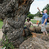 Jos. Lamerton (right), from Lamerton Woodworking, and Jose Quinonez, with Rocky's Tree Service discuss the removal of a 130-year-old American elm tree at Brown Cummings Funeral Home Friday, August 15, 2014. Sections of the tree will be used by Lamerton to create furniture for the Enid business. (Staff Photo by BONNIE VCULEK)