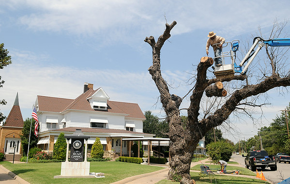 Jose Quinonez (top right), from Rocky's Tree Service, begins the removal of the 130-year-old American Elm from the front lawn of Brown Cumming's Funeral Home Friday, August 15, 2014. (Staff Photo by BONNIE VCULEK)
