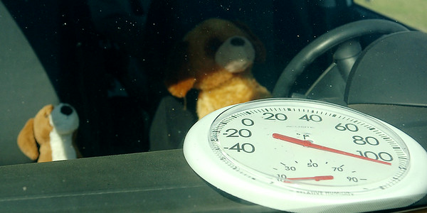 Children's stuffed toys appear inside a car as gog owners are warned about the dangers of leaving pets inside automobiles during Enid Farmers Market Dog Days of Summer Saturday, August 02, 2014. (Staff Photo by BONNIE VCULEK)