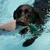 Doggie Dip Swim Party