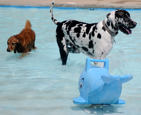 Doggie Dip Swim Party