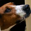 Enid SPCA
