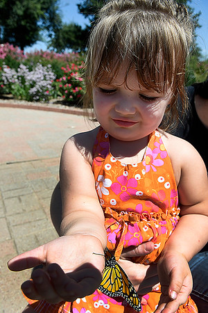 A Monarch butterfly crawls on the hand of Arielle Reed August 29, 2017 at Dillingham Garden. (Billy Hefton / Enid News & Eagle)