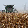 Combines harvest a corn field along south 90th street Tuesday, AUgust 20, 2019. (Billy Hefton / Enid News & Eagle)