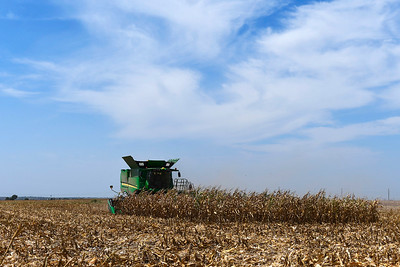 A combine harvest a corn field along south 90th street Tuesday, AUgust 20, 2019. (Billy Hefton / Enid News & Eagle)