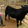 Danaka Throwers prepares her animal for the Young farmers Premium Sale Monday at the Garfield County Fair. (Staff Photo by BILLY HEFTON)