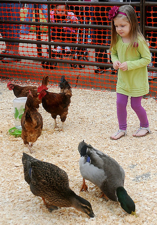 Brylie Burns causciously approaches chickens and ducks at the Cherokee Strip Celebration petting zoo Saturday in downtown Enid. (Staff Photo by BONNIE VCULEK)