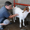 Baden Heisler washes his goat as he prepares for the Young farmers Premium Sale Monday at the Garfield County Fair. (Staff Photo by BILLY HEFTON)