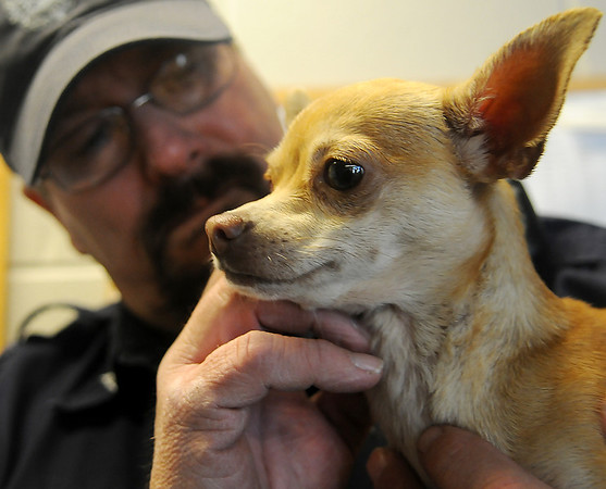Enid Animal Control officer, Gene Robertson, holds a Chihuahua that is available for adoption Wednesday, Dec. 18, 2013. (Staff Photo by BONNIE VCULEK)