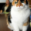 Casey, a Calico feline owned by Joyce Bean, checks out a visitor's camera lens during a session at Choices Institute. The cat loves the extra attention and helps provide calming moments for clients. (Staff Photo by BONNIE VCULEK)
