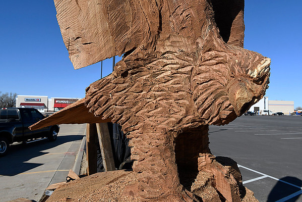 An unfinished eagle being carved by chainsaw from an old tree by Clayton Coss in the El Patio parking lot on west Garriott Wednesday February 15, 2017. (Billy Hefton / Enid News & Eagle)