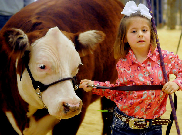 Livestock Beginning Hereford Show