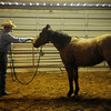 Scott Daily trains a 3-year-old gelding during the 17th annual KNID Agrifest at the Chisholm Trail Expo Center Saturday. (Staff Photo by BONNIE VCULEK)