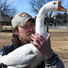 David Payne holds and pets a goose at Meadowlake Park Wednesday January 4, 2017. (Billy Hefton / Enid News & Eagle)