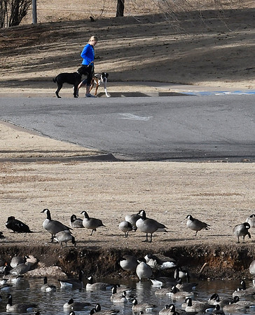 A woman walks a pair of dogs at Meadowlake Park Tuesday January 10, 2017. The Oklahoma Mesonet at Breckinridge recorded a high temperature of 65 degrees. (Billy Hefton / Enid News & Eagle)