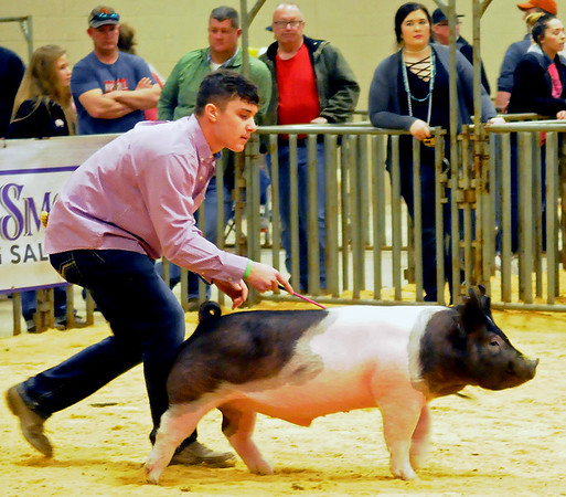 NWOSPC Pig Show