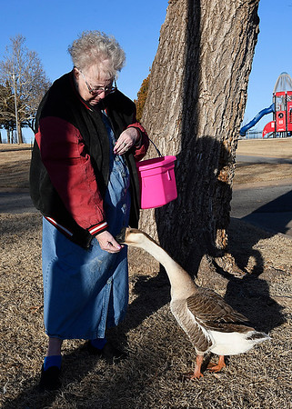 Ruby Slowik hand feeds corn to the goose she calls Psycho at Meadowlake Park Tuesday January 23, 2018. Slowik started feeding the geese and ducks at the park last April and it took about two months before they would eat out of her hand. (Billy Hefton / Enid News & Eagle)
