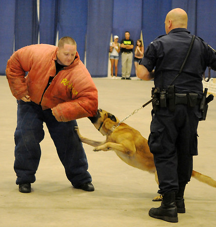 Enid Police Officer Robert McFadden (left) portrays a criminal during a K-9 demonstration with EPD Police Dog Duco and Officer Ryan Fuxa at the 4th annual Paws 4 the Cause 2013 Dachshund Dash at the Chisholm Trail Coliseum Saturday, July 27, 2013. (Staff Photo by BONNIE VCULEK)