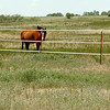 Horses stand in a pasture along south Leona Mitchell Blvd. Tuesday. (Staff Photo by BILLY HEFTON)