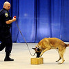Enid Police Department K-9 Officer Ryan Fuxa (left) works with EPD Police Dog, Duco, during a demonstration at the 4th annual Paws 4 the Cause 2013 Dachshund Dash Saturday, July 27, 2013 in the Chisholm Trail Coliseum. (Staff Photo by BONNIE VCULEK)