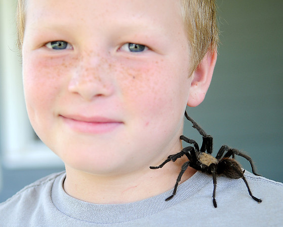Sam Akin pauses for a portrait with his pet tarantula, Charlotte, Thursday, July 19, 2013, in Enid, Okla. (Staff Photo by BONNIE VCULEK)