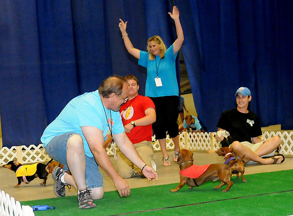 Lawton's Gwen Hunt (back, center) celebrates Mocha's grand championship win in the 4th annual Paws 4 the Cause 2013 Dachshund Dash at the Chisholm Trail Coliseum Saturday, July 27, 2013. Charlie, owned by Chad Preble (right), from Norman, finished reserved grand, Flash was a close third and Lucy Lou was fourth. Proceeds from the event fund the purchase of additional Enid Police Department police dogs. (Staff Photo by BONNIE VCULEK)