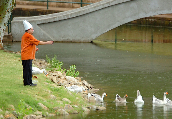 A man feeds the geese Wednesday at Government Springs Park during the brief rain shower. (Staff Photo by BILLY HEFTON)