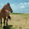 A horse stands in a pasture along south Leona Mitchell Blvd. Tuesday. (Staff Photo by BILLY HEFTON)