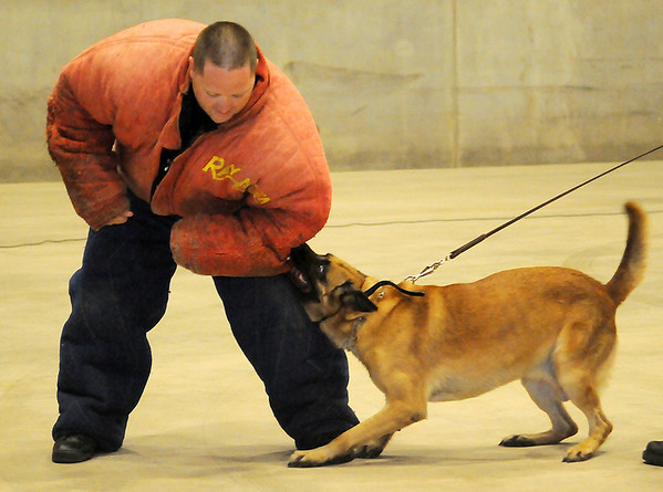 Enid Police Officer Robert McFadden (left) portrays a criminal during a K-9 demonstration with EPD Police Dog Duco at the 4th annual Paws 4 the Cause 2013 Dachshund Dash at the Chisholm Trail Coliseum Saturday, July 27, 2013. (Staff Photo by BONNIE VCULEK)