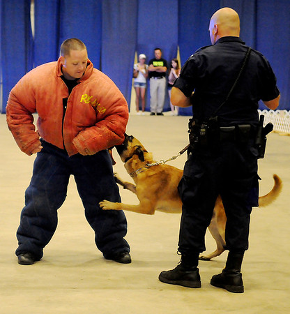 Enid Police Officer Robert McFadden portrays a criminal during a K-9 demonstration with EPD Police Dog Duco and Officer Ryan Fuxa at the 4th annual Paws 4 the Cause 2013 Dachshund Dash at the Chisholm Trail Coliseum Saturday, July 27, 2013. (Staff Photo by BONNIE VCULEK)