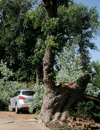 A gigantic tree fell into Carl Crites' yard at 1613 E. Pine barely missing a Nissan SUV parked (left) in the neighbor's driveway as a severe thunderstorm moved through Enid early Thursday, July 10, 2014. Crites reported that the fallen tree destroyed part of his fence. (Staff Photo by BONNIE VCULEK)