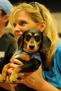 Mocha relaxes in the arms of her owner, Gwen Hunt, after winning the adult division championship for the second year in a row at the Paws 4 the Cause Dachshund Dash in the Chisholm Trail Coliseum Saturday, July 19, 2014. (Staff Photo by BONNIE VCULEK)