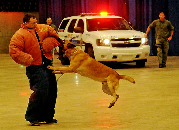 Duco, an Enid Police Department K-9, attacks Shawn Brunzo during a demonstration at the 5th annual Paws 4 the Cause Dachshund Dash at the Chisholm Trail Coliseum Saturday, July 19, 2014. (Staff Photo by BONNIE VCULEK)