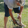 Dennis Hoopingarner places an 18.5 inch catfish back into his basket after fishing derby officials measured his morning catch at Meadowlake Park Friday, July 4, 2014. (Staff Photo by BONNIE VCULEK)