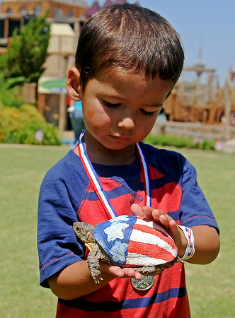 Kody Allison, 3, glances at his two-time turtle race champion at Leonardo's Children's Museum Hometown Celebration at Adventure Quest Friday, July 4, 2014. (Staff Photo by BONNE VCULEK)