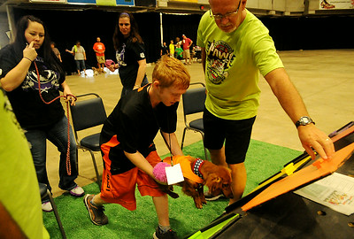 Ernie Currier assists (right) as Ryian Willis places Sheldon in the Paws 4 the Cause Dachshund Dash blocks at the Chisholm Trail Coliseum Saturday, July 19, 2014. (Staff Photo by BONNIE VCULEK)