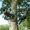 Drew and Grace Dewald scale a giant sycamore tree at Government Springs Park Saturday, July 26, 2014. Jim Mitchell, from Professional Tree Care, assisted the young couple with their tree climbing lesson as part of Grace's 21st birthday surprise. (Staff Photo by BONNIE VCULEK)