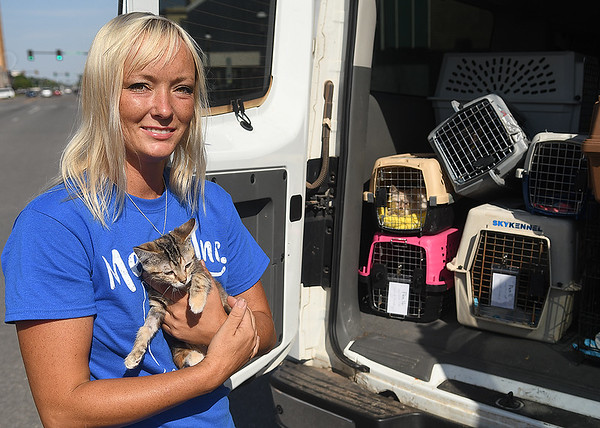 Rhema Abercrombie; founder of Meows Inc., holds a rescue kitten after returning from Stillwater where she had several kittens medically examined. (Billy Hefton / Enid News & Eagle)