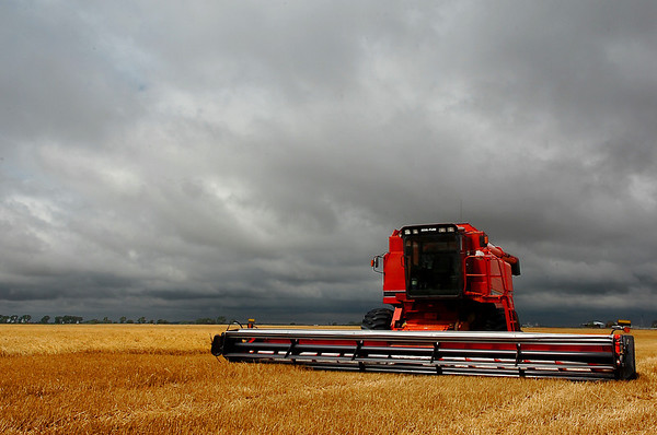 A combine sits idle Monday morning after the county received over two inches of rain bringing the wheat harvest to a halt. (Staff Photo by BILLY HEFTON)