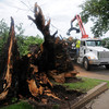 Josh Redding, with the City of Enid, removes a fallen American Elm in front of First Presbyterian Church, 502 W. Maine, after high winds moves across the area early Wednesday, June 5, 2013. City crews blocked the 500 block of Maine while they cleared the debris. (Staff Photo by BONNIE VCULEK)