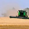 A combine harvests a wheat field southwest of Waukomis Wednesday. (Staff Photo by BILLY HEFTON)