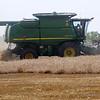 Harvest continues near Enid Friday, June 21, 2013. (Staff Photo by BONNIE VCULEK)
