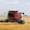 Combines resume the wheat harvest a field west of Enid Wednesday after it was halted by two inches of rain over the weekend. (Staff Photo by BILLY HEFTON)