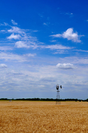 A windmill stands in a field of wheat north of Helena. (Staff Photo by BILLY HEFTON)
