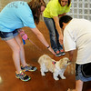 Northern Oklahoma State University Science Camp participants (left) show a young man how to approach Pistol during a special class on dog bite prevention at Applewood Learning Center at the YWCA Wednesday, June 4, 2014. (Staff Photo by BONNIE VCULEK)